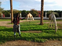 the road sunday's explosion happened on... Just last month I stopped to get a pic with grazing camels!